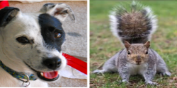 Is your Success right in front of you? Lily vs. The Squirrel.
